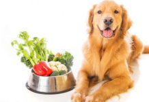 Photo Image Can Dog Eat Red Peppers Is it Good