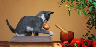 Photo Image Can Cats Eat Onions Is It Safe